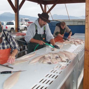 Cleaning.and.Filleting.the.Halibut.jpg