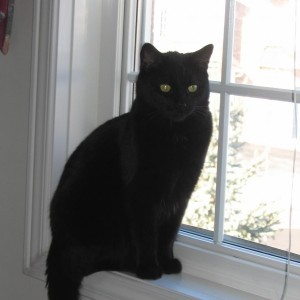 Black_cat_on_window.JPG