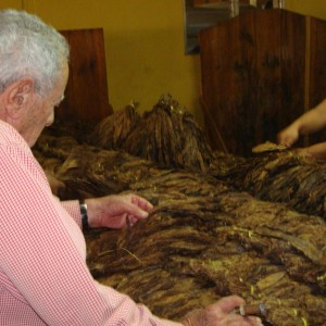 Don Orlando inspecting one of his pilones of tobacco