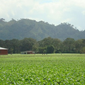 Jalapa Valley