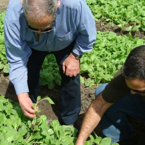 Don Orlando and Jorge inspecting thier seedlings